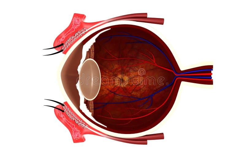 Eye. Digital illustration of eye in colour background royalty free illustration