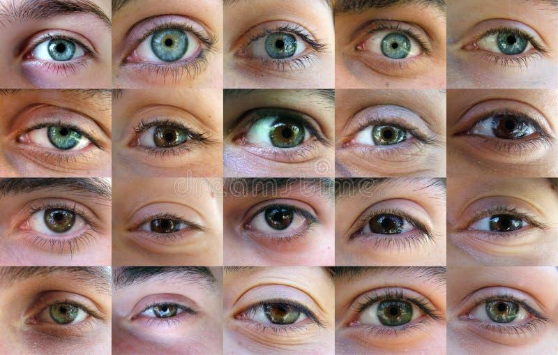 Eye, eyes - many eyes stock image
