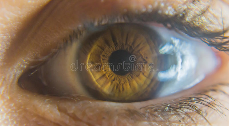 Eye. S are the organs of vision. They detect light and convert it into electro-chemical impulses in neurons. In higher organisms the  is a complex optical system stock photo