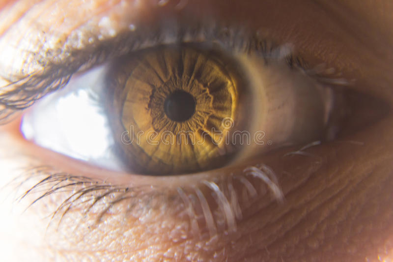 Eye. S are the organs of vision. They detect light and convert it into electro-chemical impulses in neurons. In higher organisms the  is a complex optical system royalty free stock images