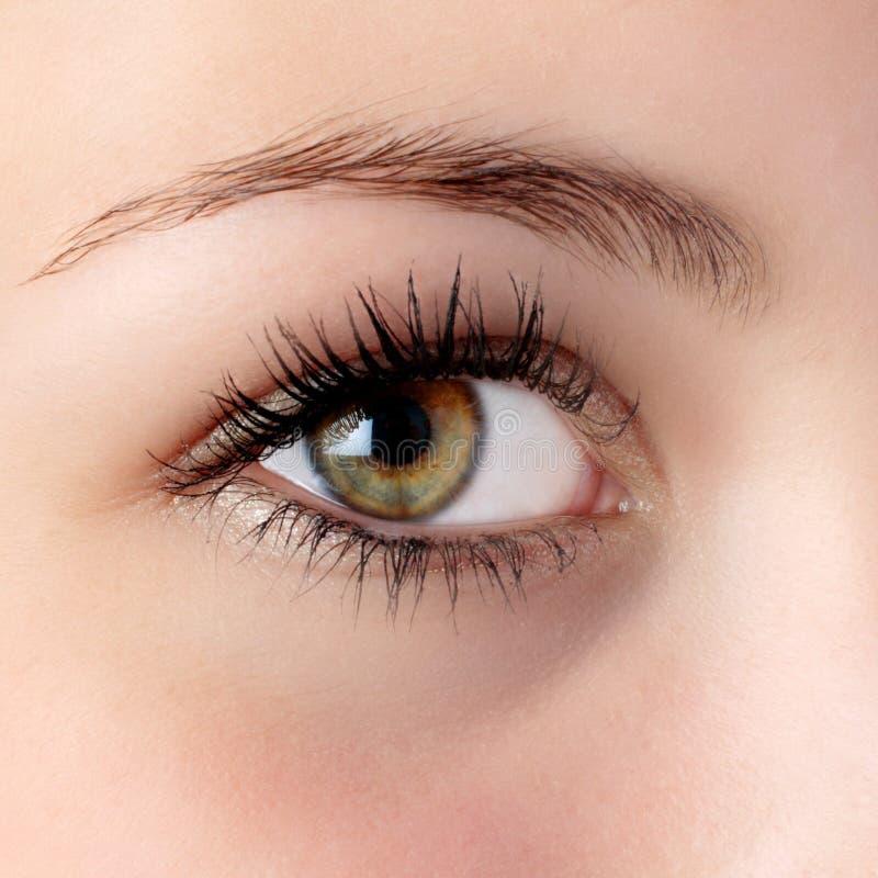eye hazel стоковое изображение rf