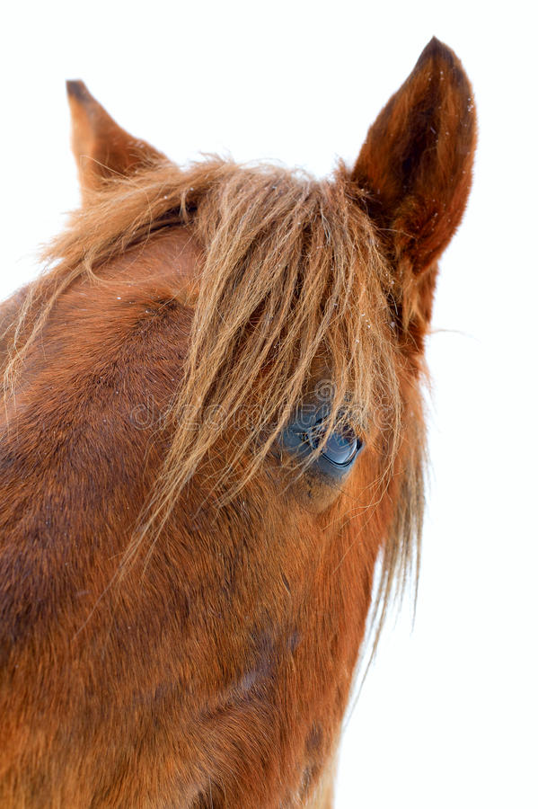 Download Eye Of The Horse Royalty Free Stock Image - Image: 20093856