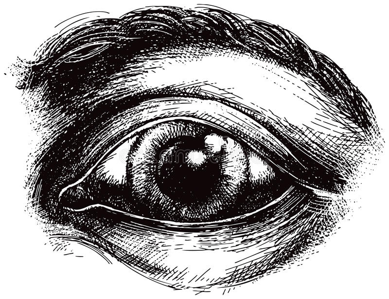 Eye illustration. A detailed illustration of a human eye royalty free illustration