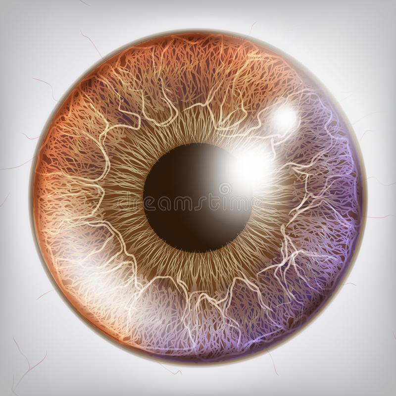 Eye Iris Realistic Vector. Anatomy Concept Illustration Stock Vector ...