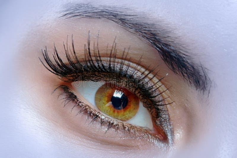 eye kvinnligmakroen royaltyfria foton