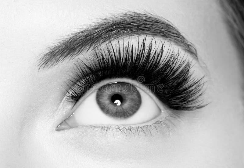 Eye lashes, lash extension woman lashes close up macro monochrome. Studio shot stock image