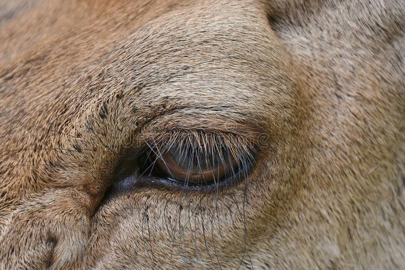 Eye, Mammal, Wildlife, Fauna Free Public Domain Cc0 Image