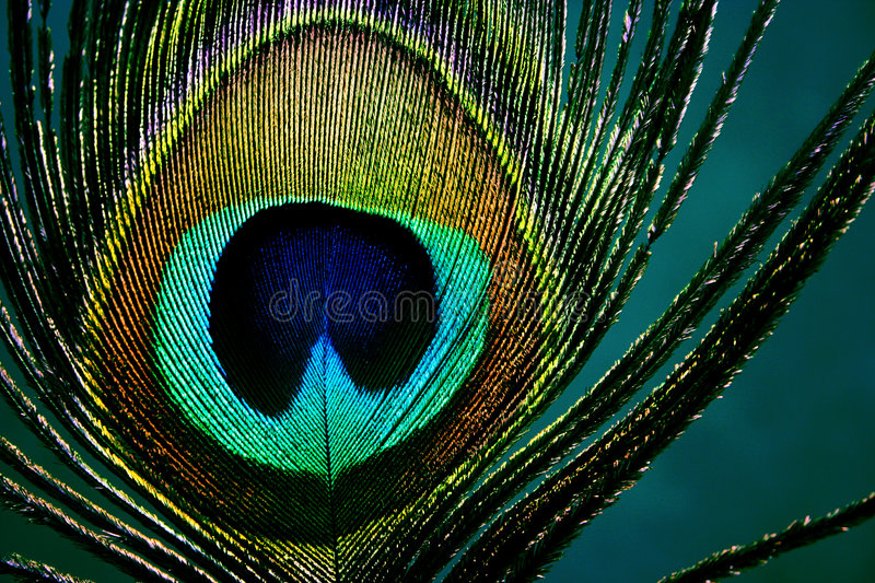 Eye of peacock - detail stock photo