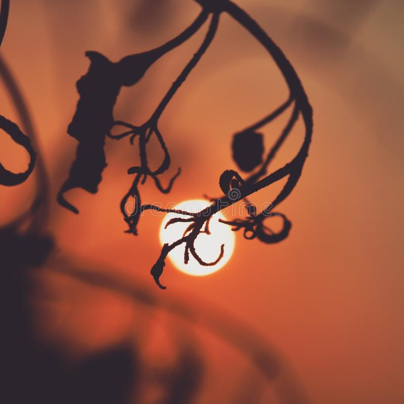 An eye poking evening.. royalty free stock images
