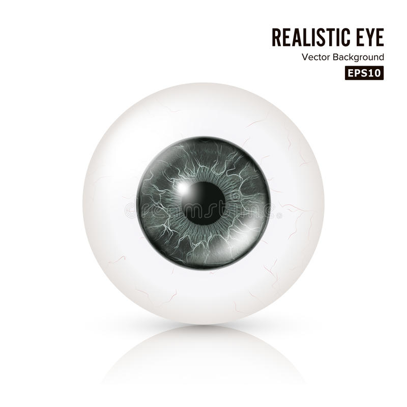 Eye Realistic. Vector Illustration Of 3d Human Glossy Photo Rrealistic Eye With Shadow And Reflection. Front View royalty free illustration