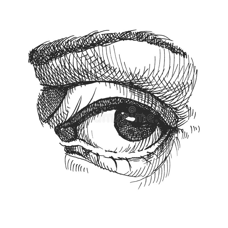 Eye. Realistic vector illustration. Hand drawn. Eps8 royalty free illustration
