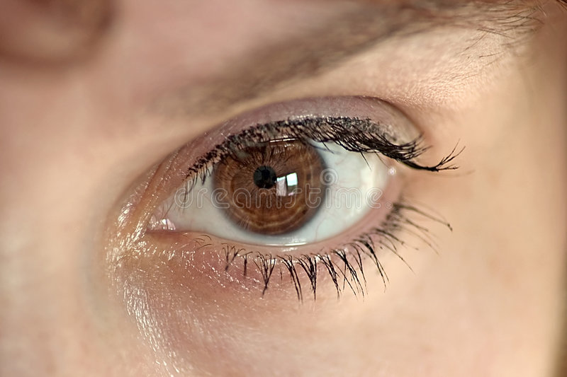 Download Eye series stock image. Image of women, close, brow, front - 165997