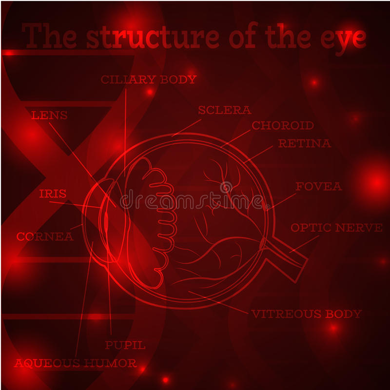 Eye structure red. Human eye anatomy structure. Medical manual for ophthalmology clinic, vector illustration. Iris, pupil, lens, nerve, macula, retina, cornea on royalty free illustration