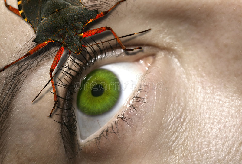Eye to eye. With a horrifying bug royalty free stock photography