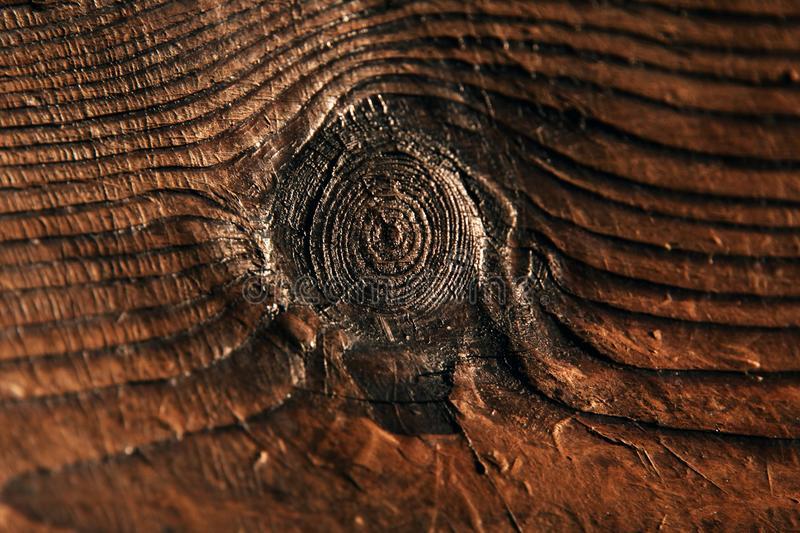 Eye of a tree stock photo