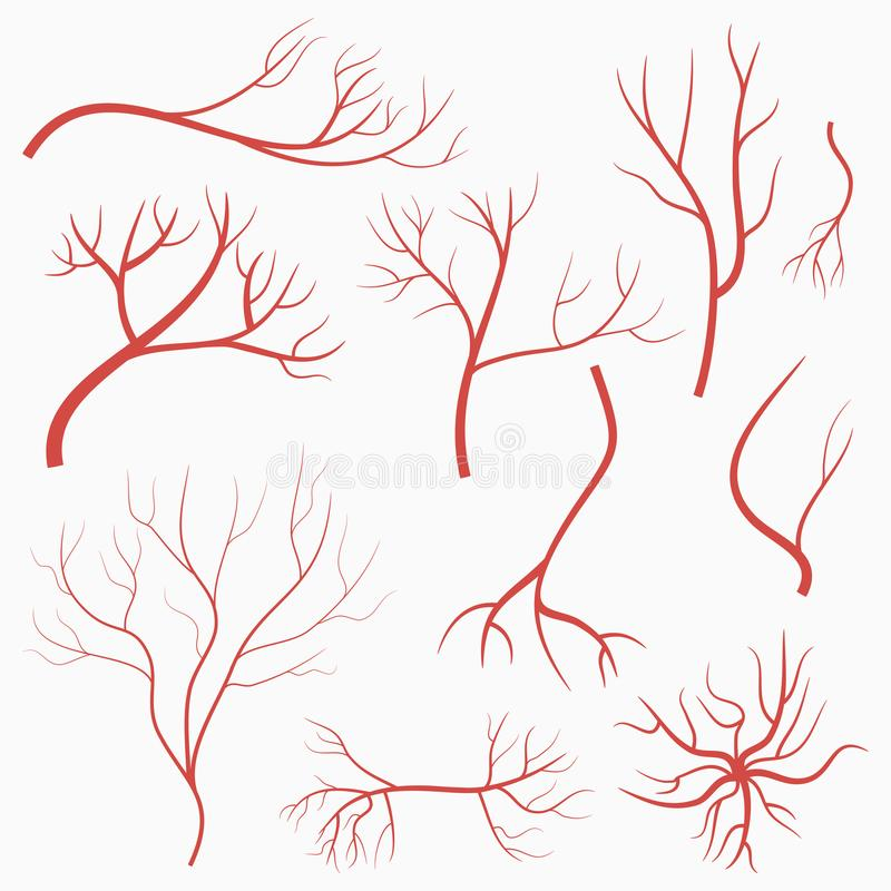 Eye Veins And Arteries Set Of Red Vessels Elements Of Human Blood