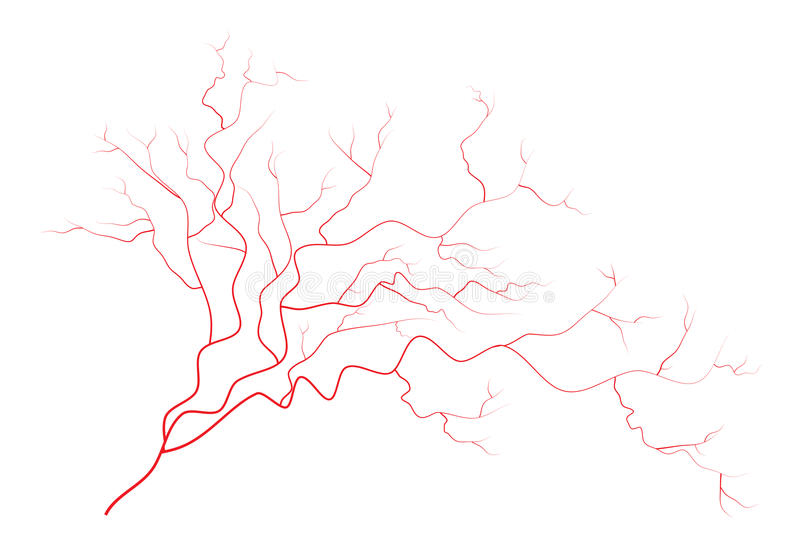 Eye Veins Human Red Blood Vessels Blood System Vector Illustration On White Background Stock Vector Illustration Of White Abstract 61525523 Check out our blood vessels veins selection for the very best in unique or custom, handmade pieces from our shops. eye veins human red blood vessels