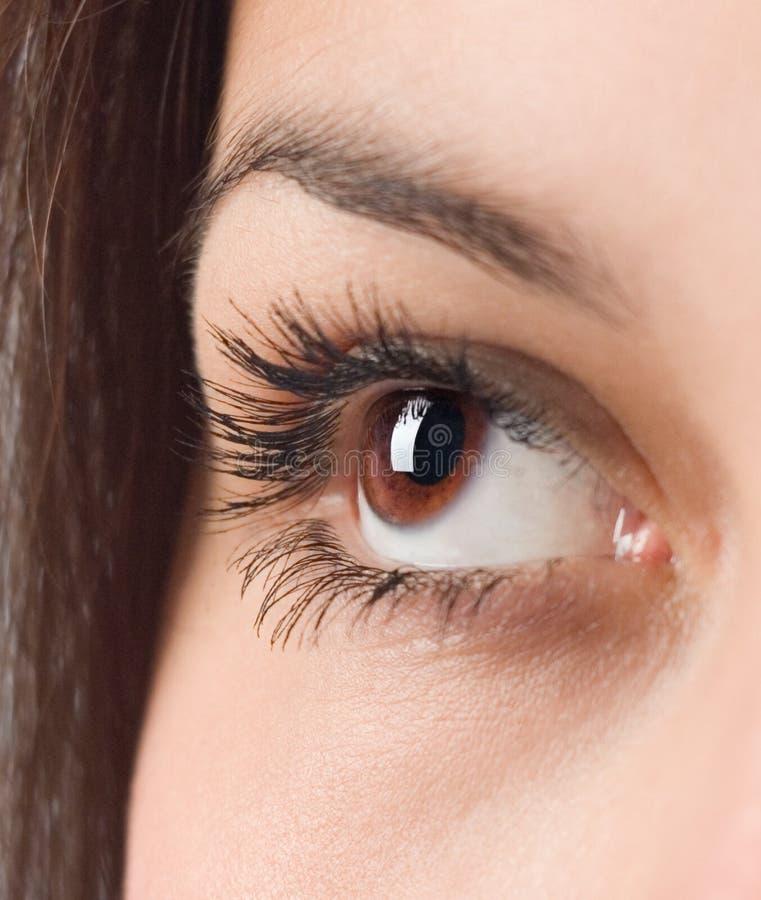 Eye of the young girl. Long eyelash eye of the young girl royalty free stock photography
