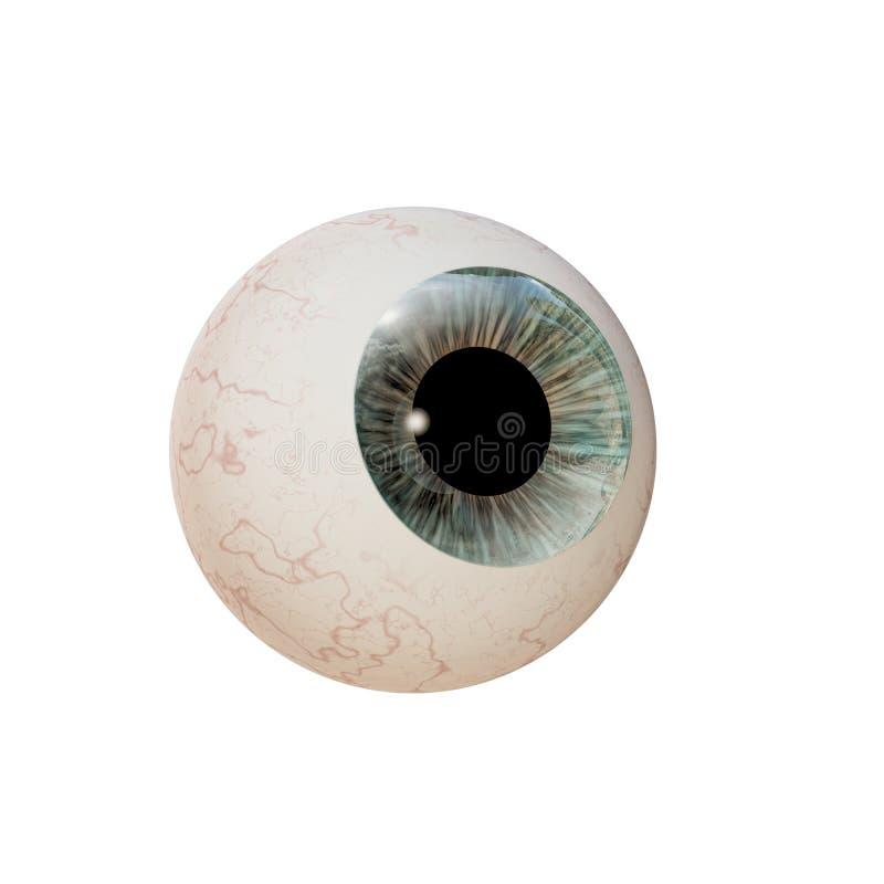 Eyeball. Isolated on white background vector illustration