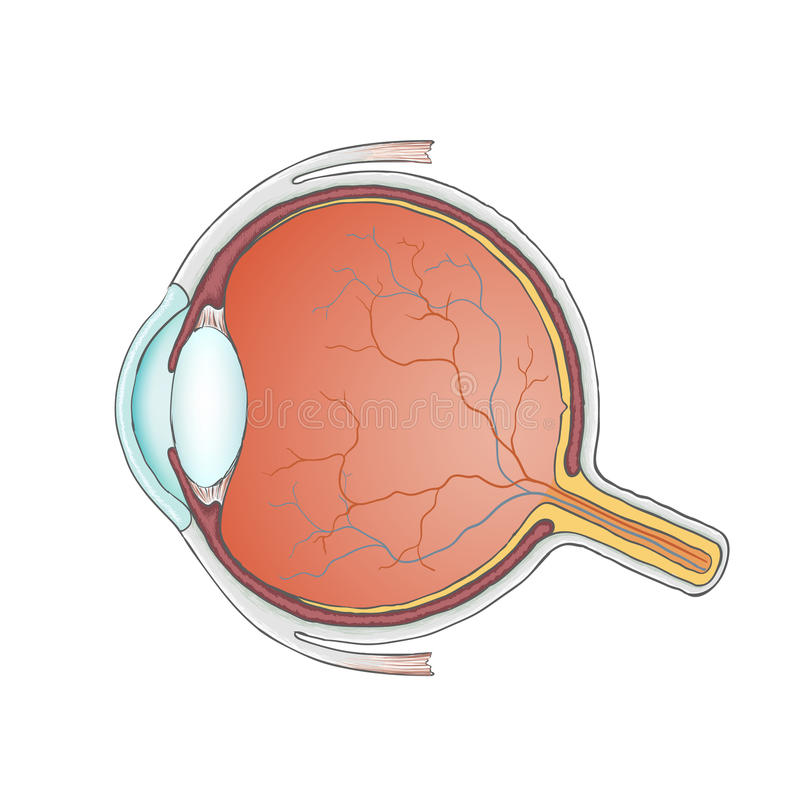 eyeball tła jaskrawy ilustracyjny pomarańcze zapas royalty ilustracja