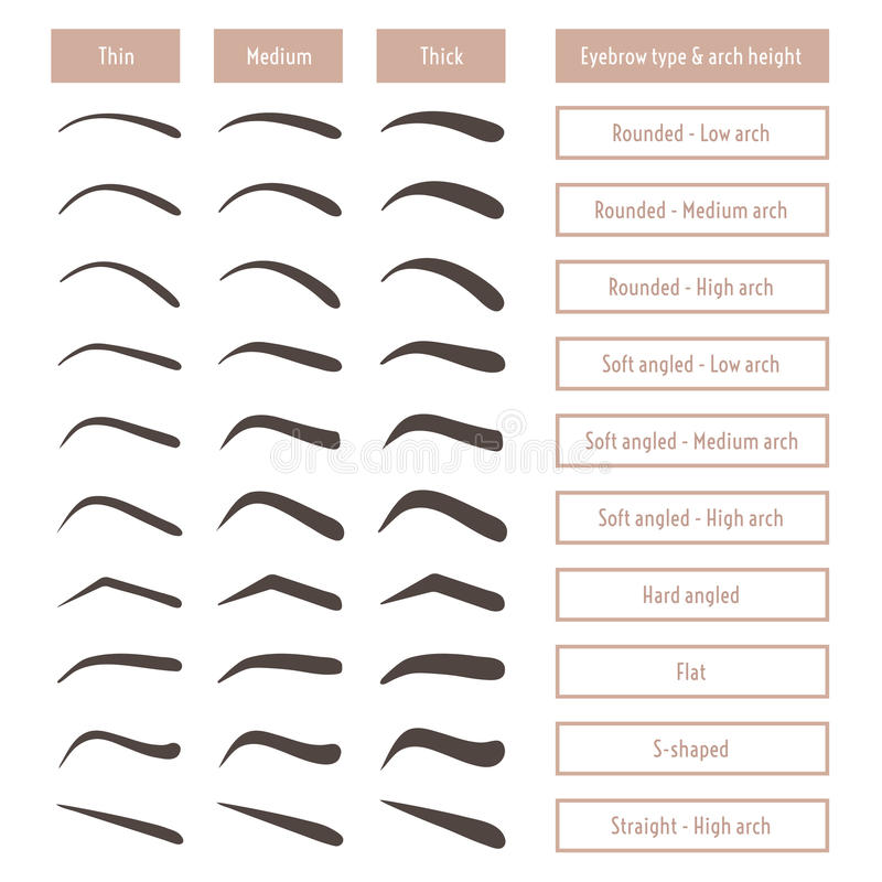 Free Eyebrow Shapes. Various Brow Types. Vector Table With Eyebrows And Captions. Stock Photo - 80674880