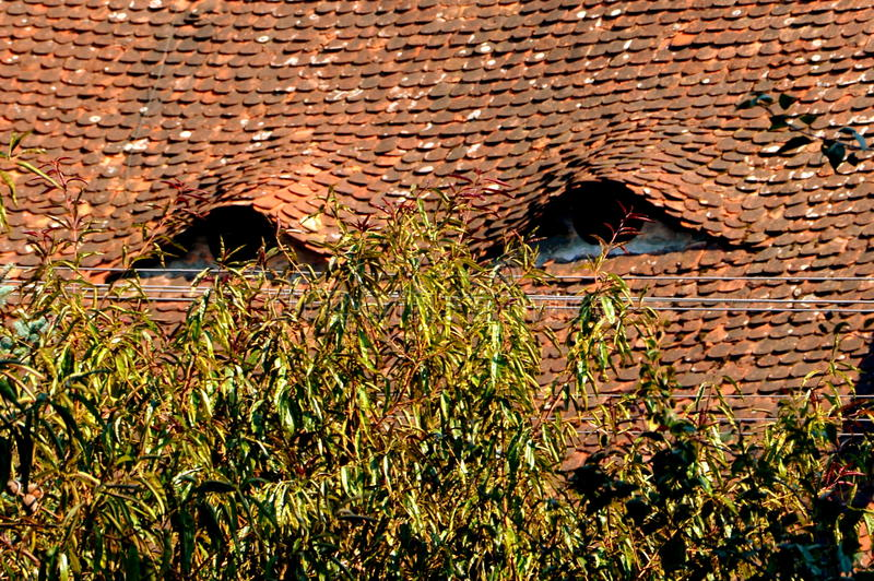 Eyed roof in the medieval town Sighisoara, Transylvania. Urban landscape in the downtown of the medieval city Sighisoara, Transylvania royalty free stock images