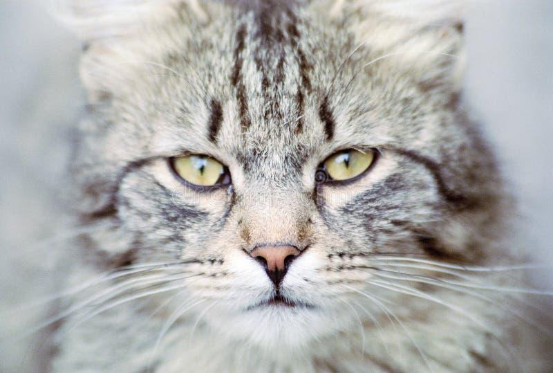 The eyes stock image