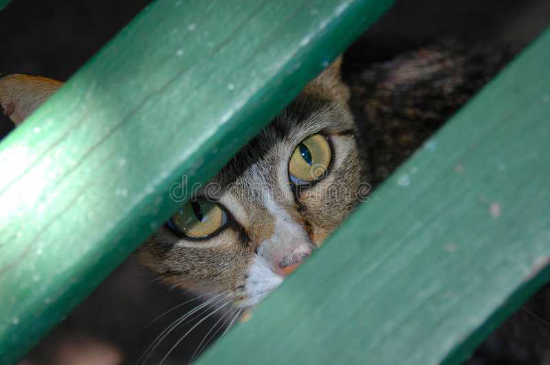 Eyes of a cat royalty free stock image