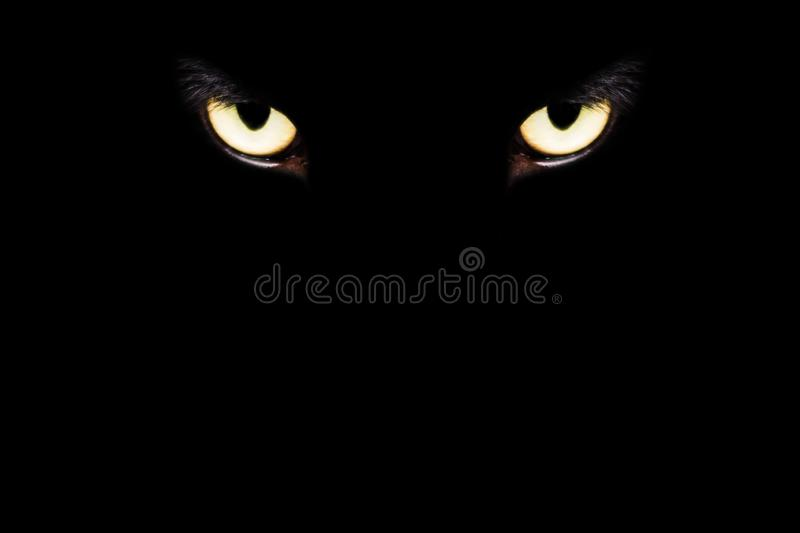 eyes of Cat surgery under anesthesia in sterilization and surgery sterilization. royalty free stock photography