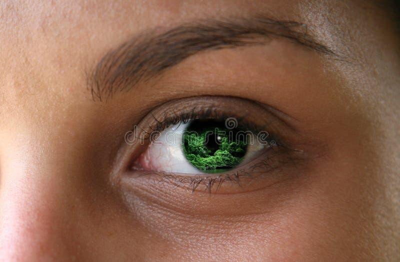 eyes djungeln royaltyfri foto