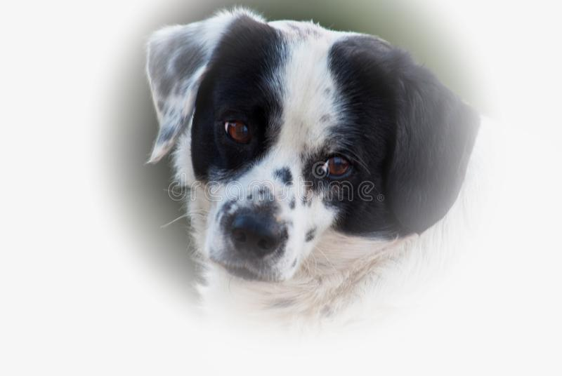 The eyes of a dog speaks. The eyes of a dog can speak, he fills himself disadvantaged and is jealous royalty free stock image