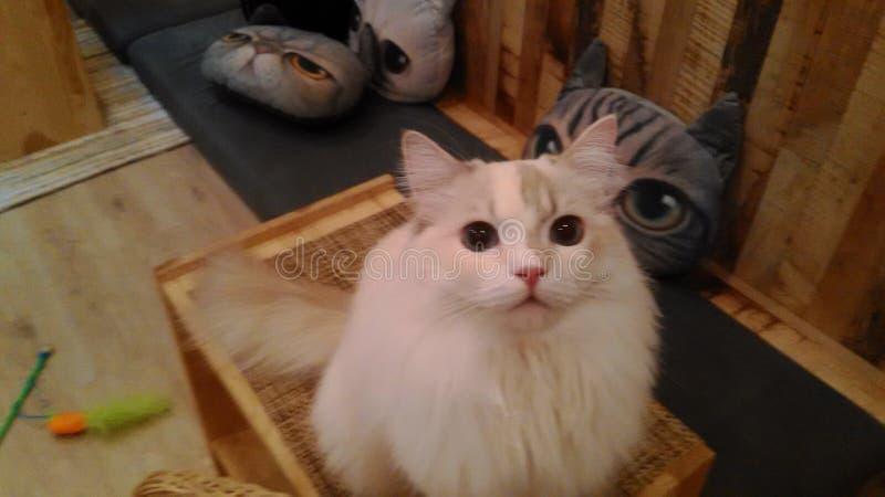 Those eyes stock photo