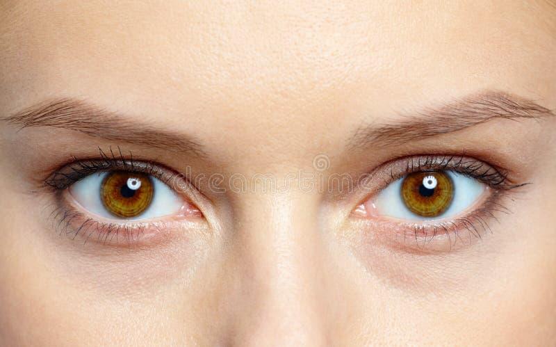 eyes humanen arkivbilder