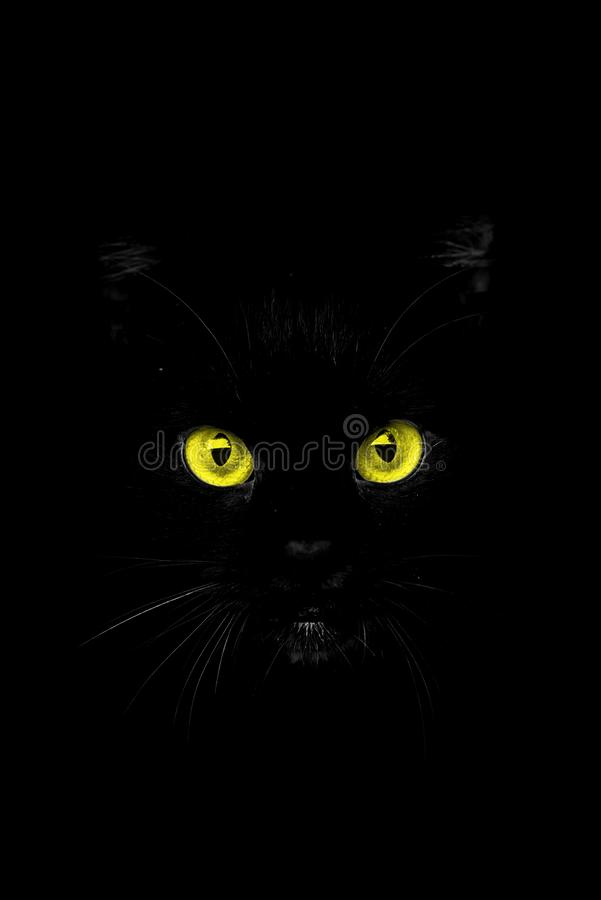 The eyes from the shadow. Stylish abstract background for mobile phone of a black cat head with yellow eyes against black background. The shot i processed in a