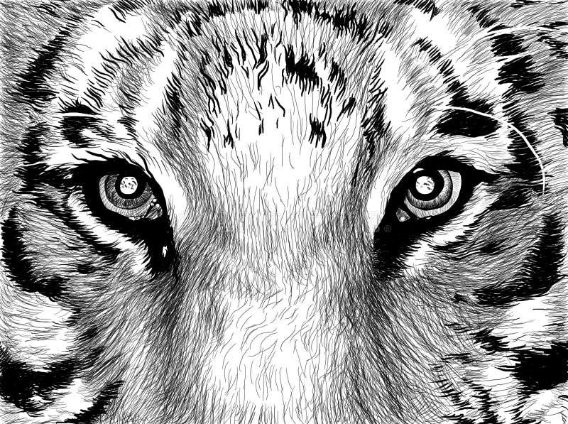 eyes tigern royaltyfri illustrationer