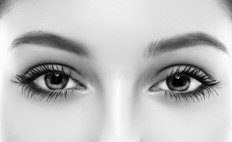 Download eyes woman eyebrow eyes lashes black and white stock image image of close
