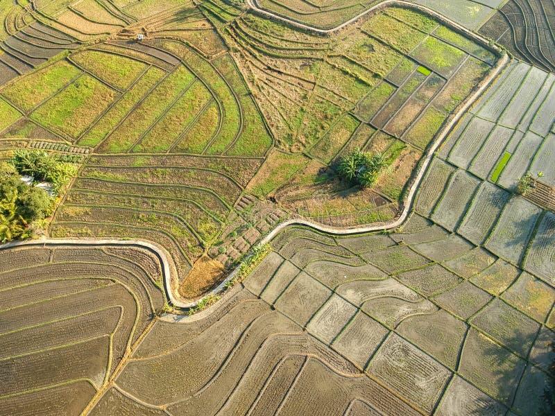 Eyeview de bourdon ou d'oiseau de gisement de riz de Bali photos stock