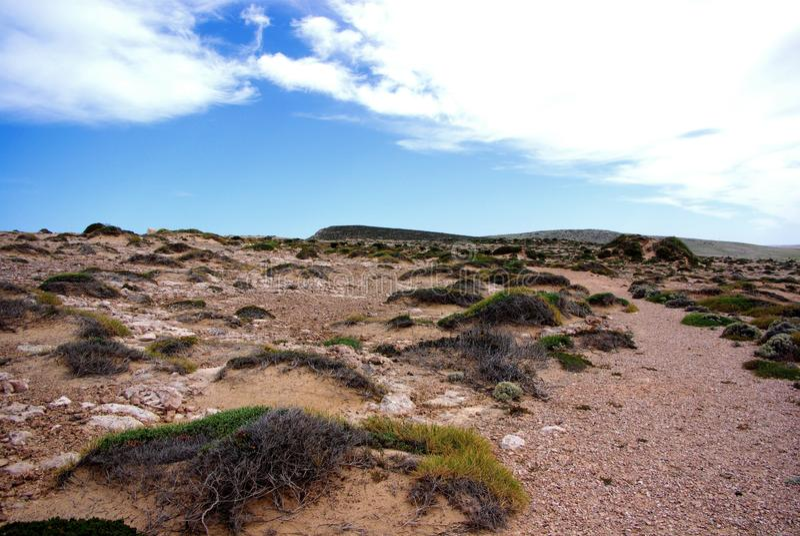 Eyre-Halbinsel, auf den Klippen lizenzfreie stockfotografie