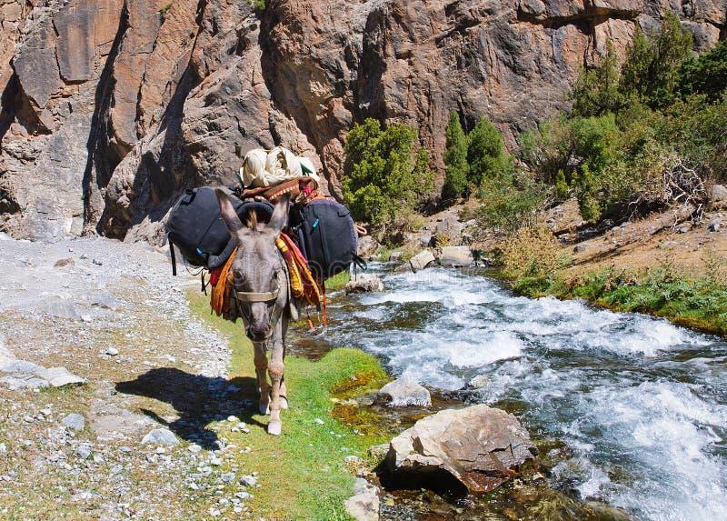 Ezel in de bergrivier geladen rugzakken stock foto's