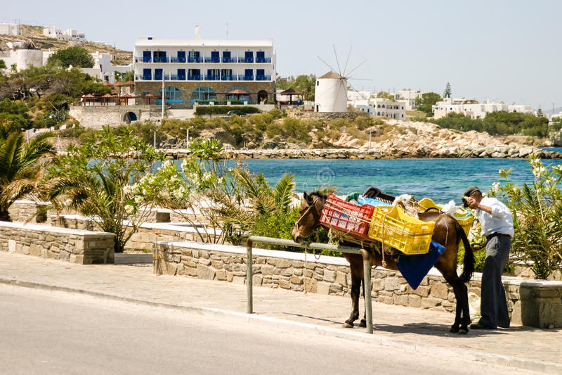Ezel in Griekenland stock foto