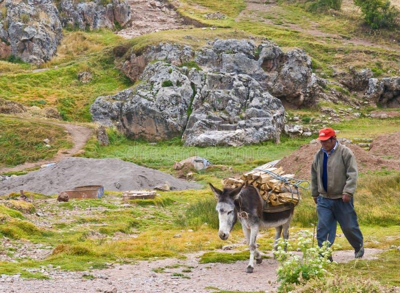 Ezel in Peru royalty-vrije stock fotografie