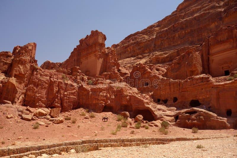 Ezel in Petra Jordan royalty-vrije stock afbeeldingen