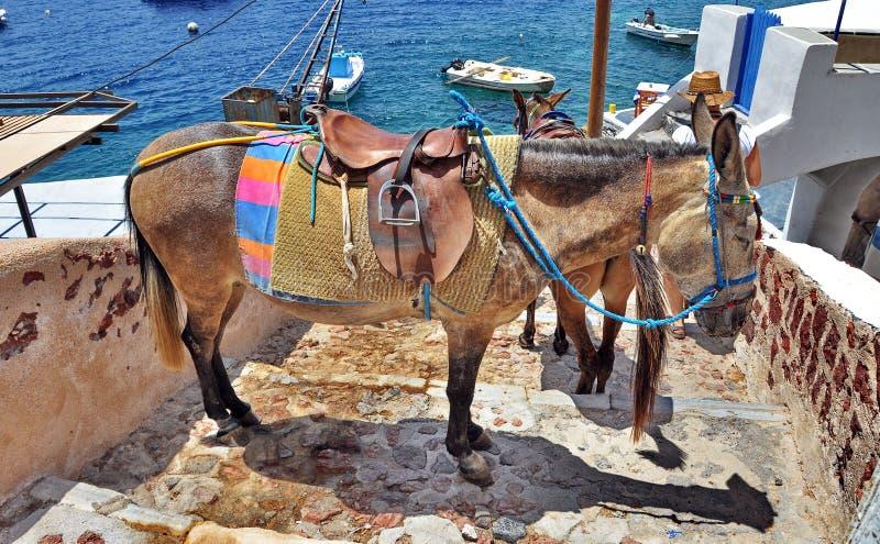 Ezel van Santorini royalty-vrije stock foto