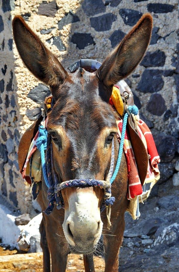 Ezel van Santorini royalty-vrije stock fotografie