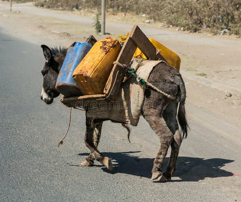 Ezels dragend water in Landelijk Ethiopië stock fotografie