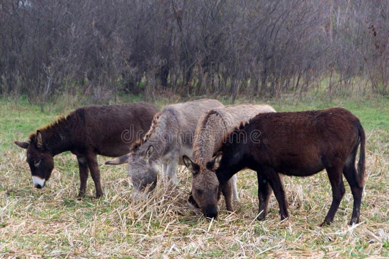 Ezels in een nationaal park royalty-vrije stock foto