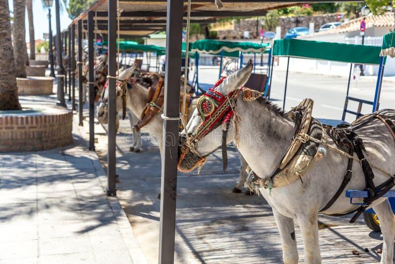 Ezels in Mijas stock fotografie