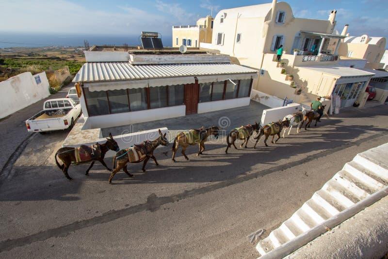 Ezels op Santorini, Griekenland stock afbeelding