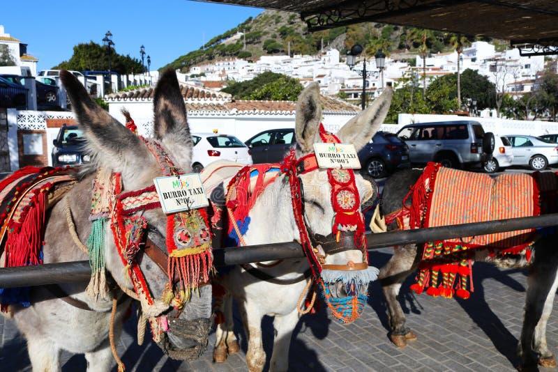 Ezelstaxis in Mijas Pueblo wordt opgesteld die stock foto