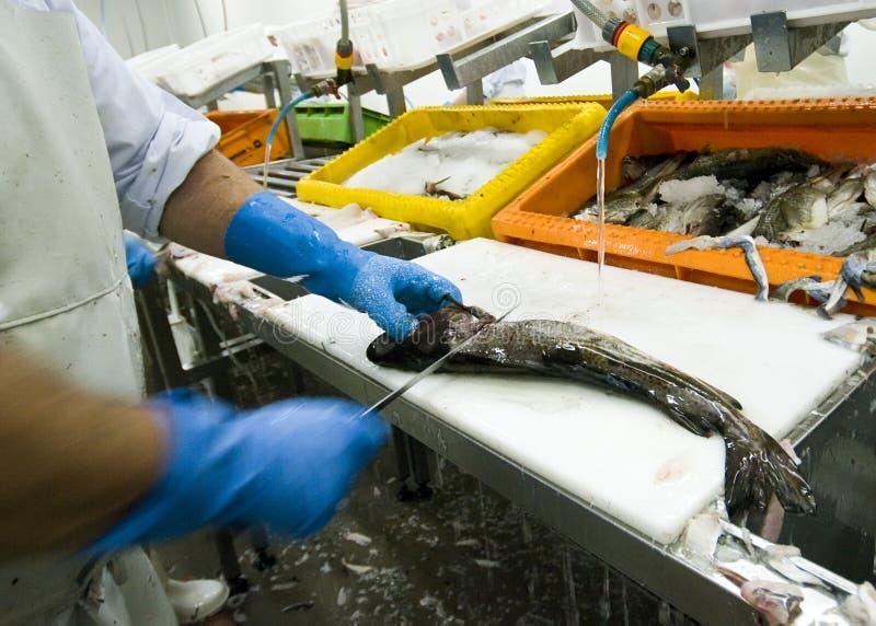 Fábrica de proceso de los pescados imagen de archivo libre de regalías